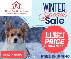Best Winter Deals on Pet Supplies