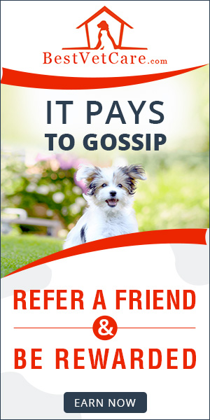 Get Rewarded, Make Your Friends Love You More!