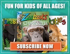 Free Zoobooks Issue + Free Gifts