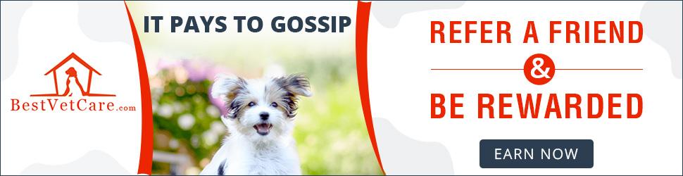 It Pays to Gossip: Refer a Friend & Get Rewarded.