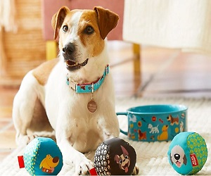 Shop Disney Pet Essentials