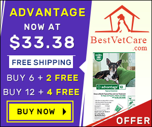 Image for Buy Online Advantage Flea For Dogs at Lowest Price & Free Shipping in US