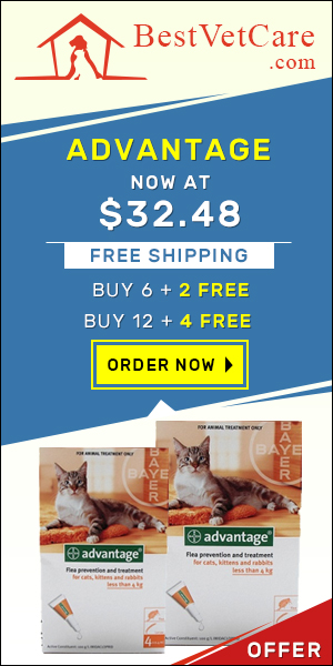 Buy Online Advantage for Cats at Cheapest Price & Free Shipping