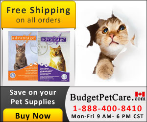 Image for Buy Cheapest Advantage Flea Treatment For Cats Online