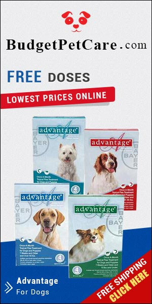 Buy Cheapest Advantage Flea Treatment For Dogs Online Pet Pest & Medical Supplies