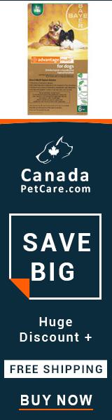 Online Advocate For Dog