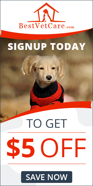 Best Vet Care - Register Now & Save BIG!