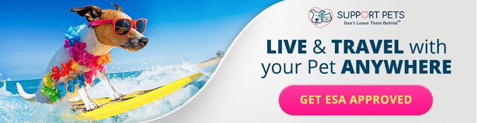 970x250 Live & Travel with your Pet
