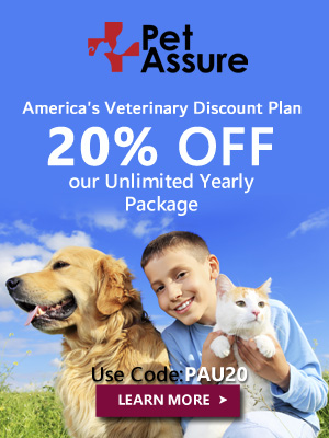 20% OFF Our Unlimited Yearly Package 300x400