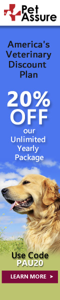 20% OFF Our Unlimited Yearly Package 120x600